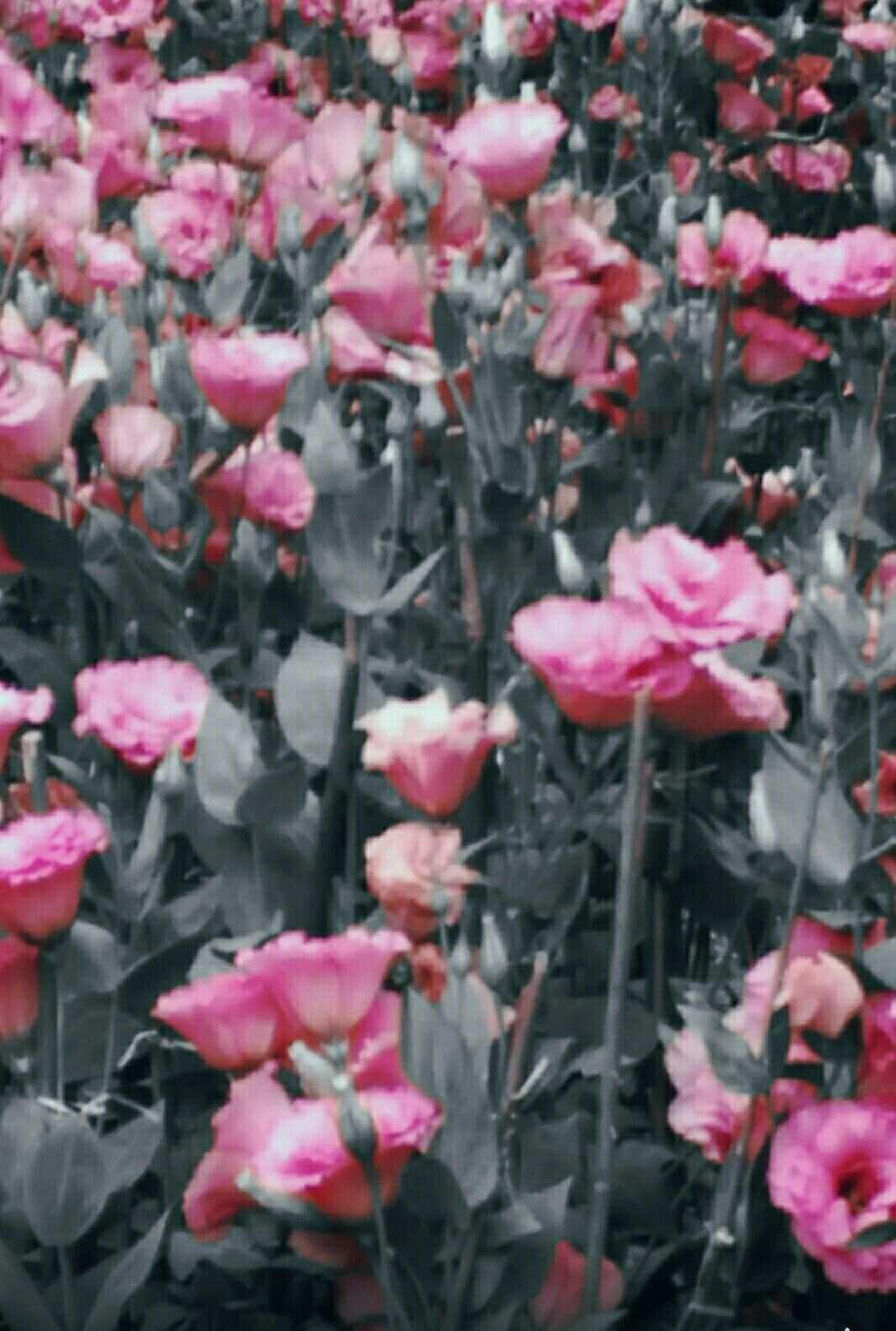 Pin Von Galeri Ku Auf Beatiful Flowers