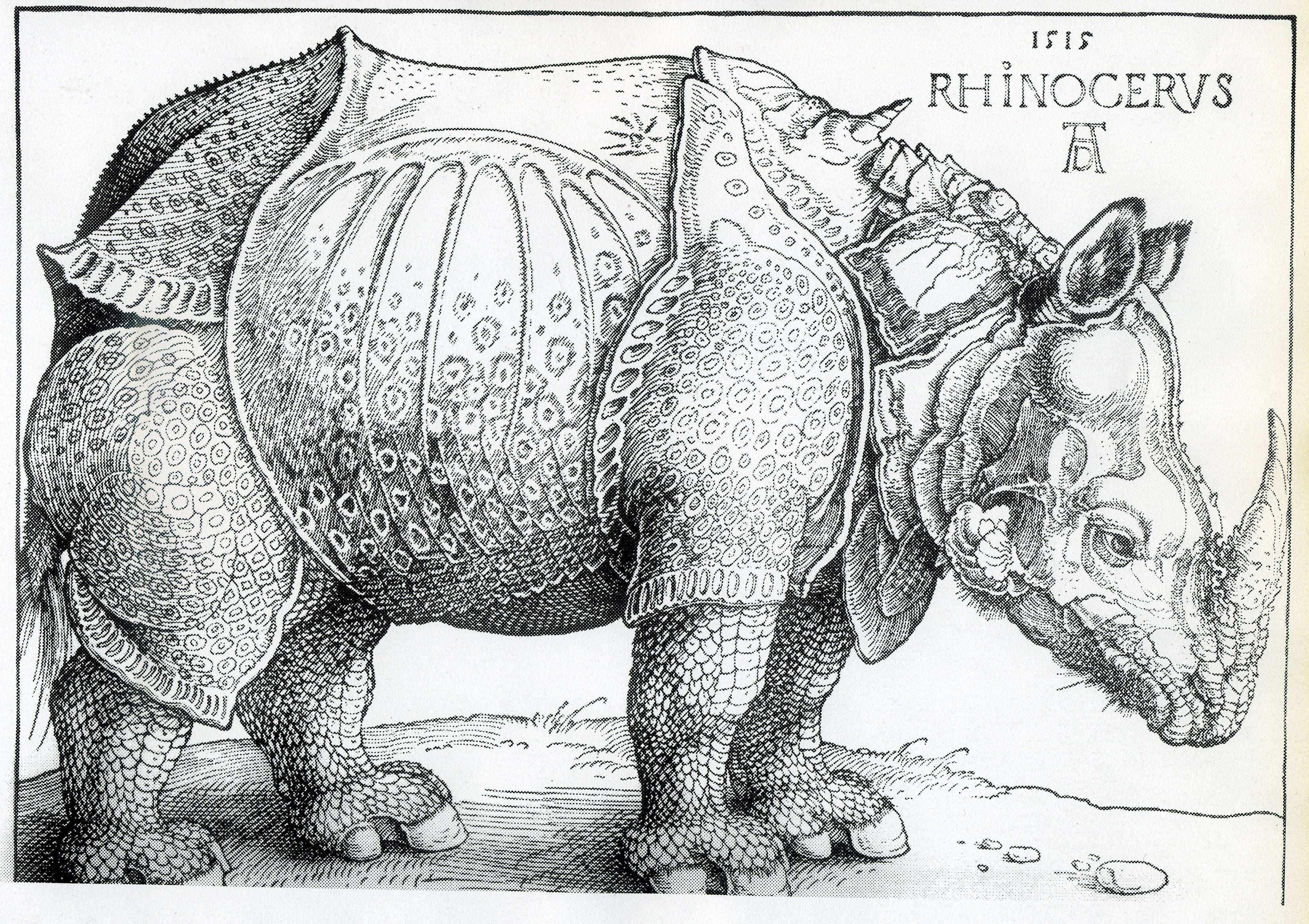 Ad Rhino Rhino Art Posters Art Prints Albrecht Durer