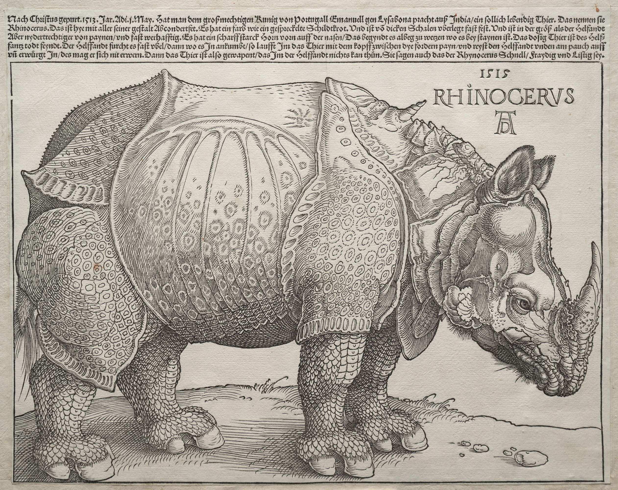 Albrecht Durer The Rhinoceros 1515 The Ibis In 2020 Albrecht Durer Albrecht Durer Rhinoceros