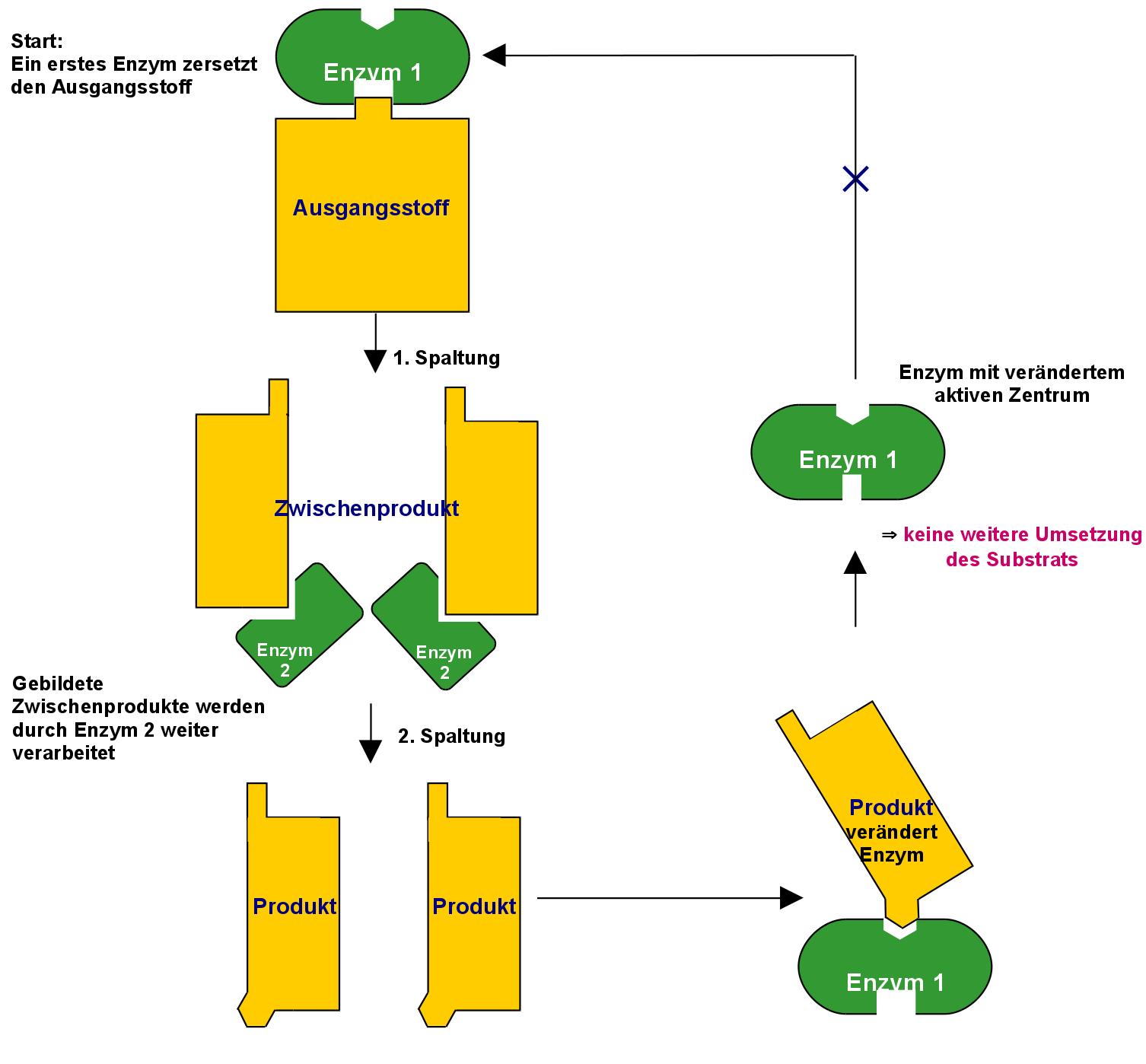 Freies Lehrbuch Biologie 08 13 Aminosauren Eiweisse Enzyme Und Die Biokatalyse
