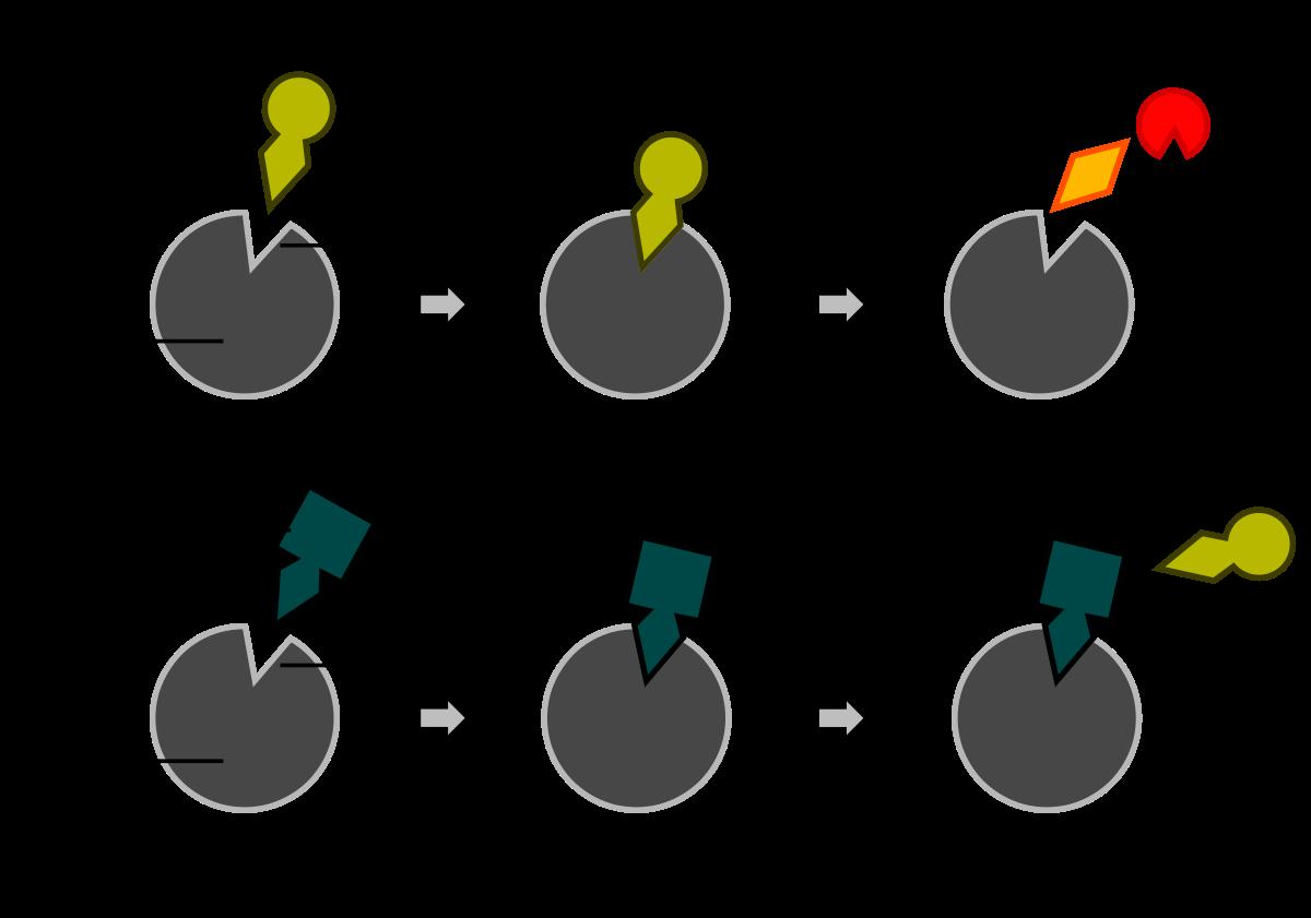 Kompetitive Hemmung Wikipedia