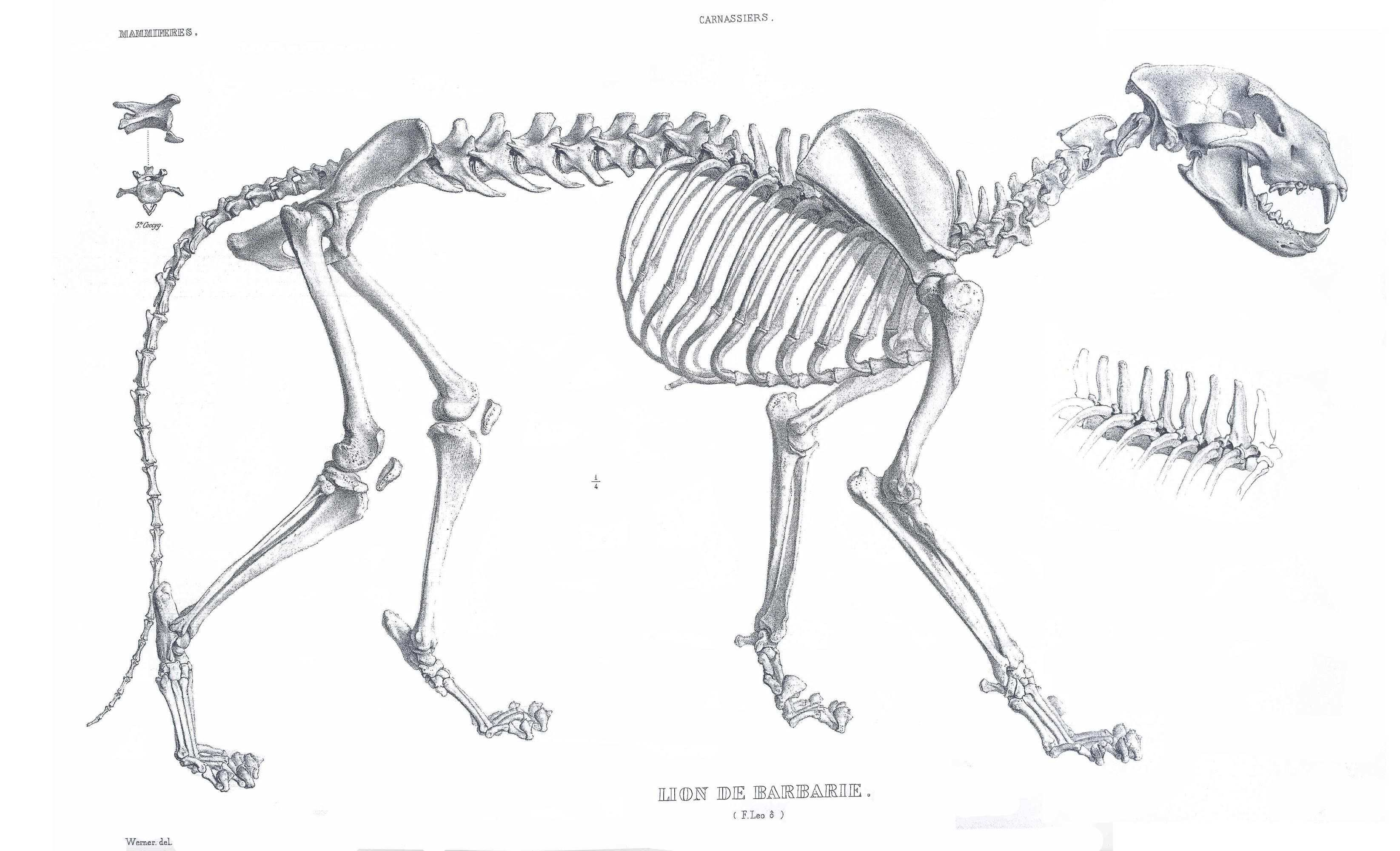 Iis 7 5 Detailed Error 404 0 Not Found Tiere Skelett Anatomie