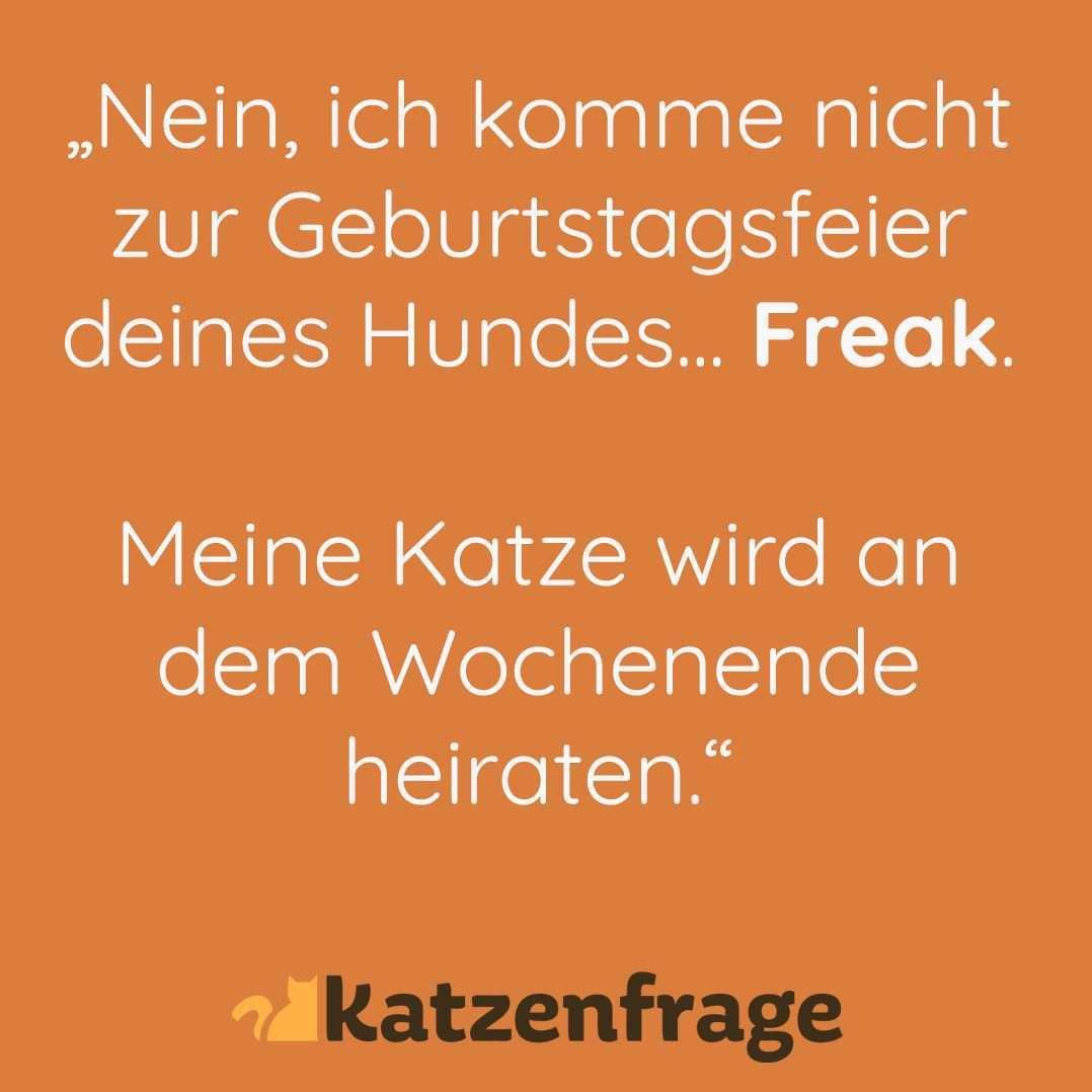 Katzenfrage Katze Lustig Spruche Katzenwitz Hund Witzige Spruche The Words Witzig