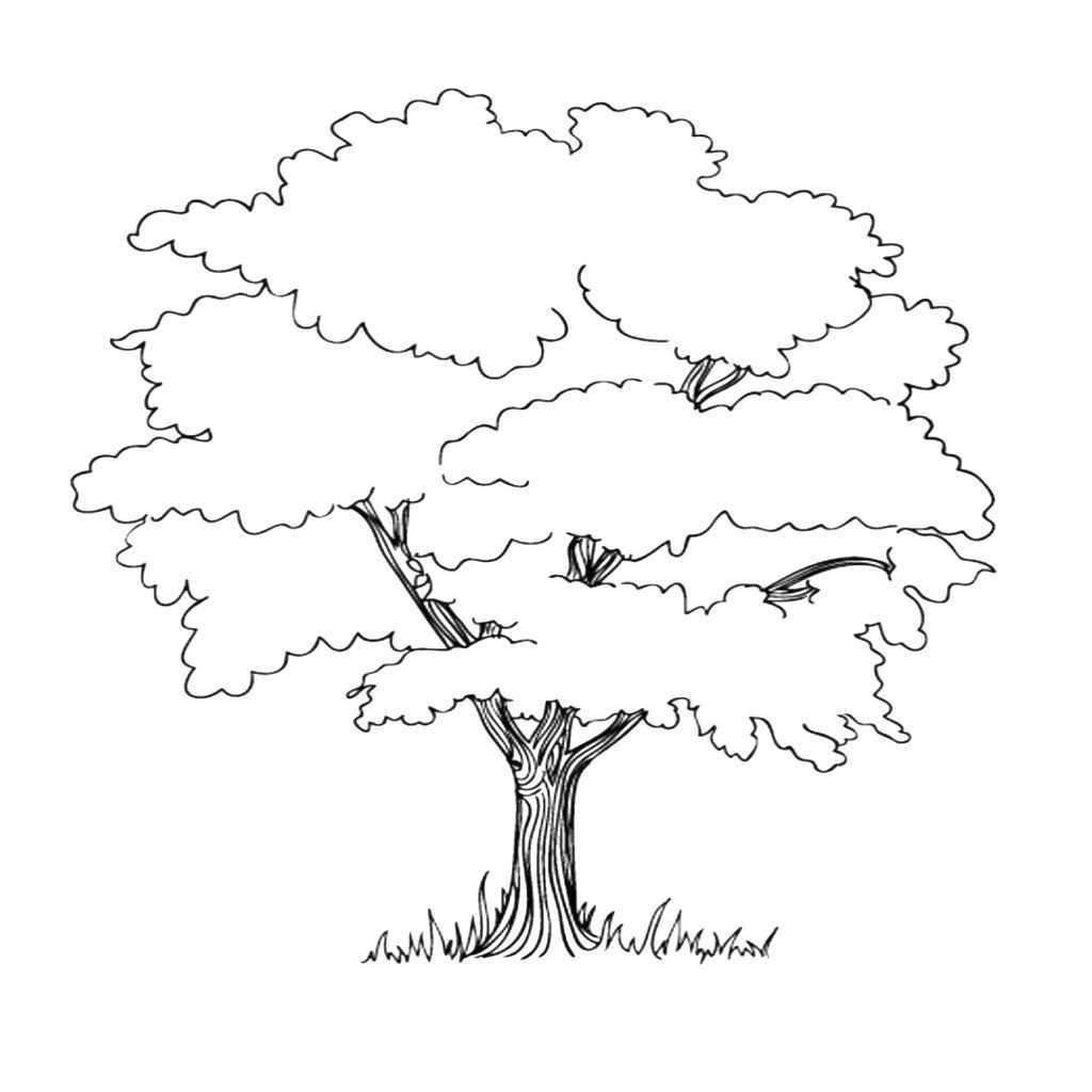 Baum Mit Wurzeln Ausmalbild Baum Umriss Wenn Du Mal Buch Baum Zeichnung