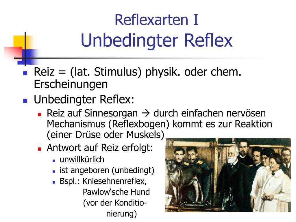 Ppt Klassisches Konditionieren Powerpoint Presentation Free Download Id 402406