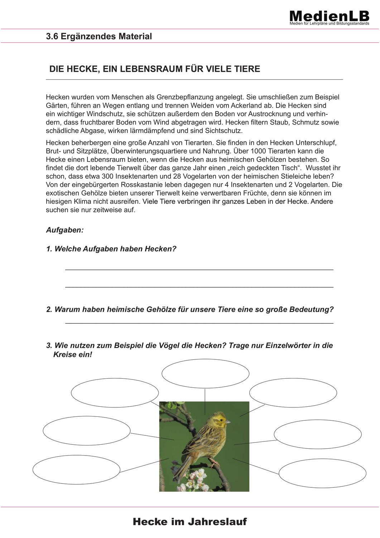 Die Hecke Als Lebensraum Fur Tiere Und Pflanzen Unterrichtsmaterial Im Fach Sachunterricht Lebensraum Lehrer Planer Leben