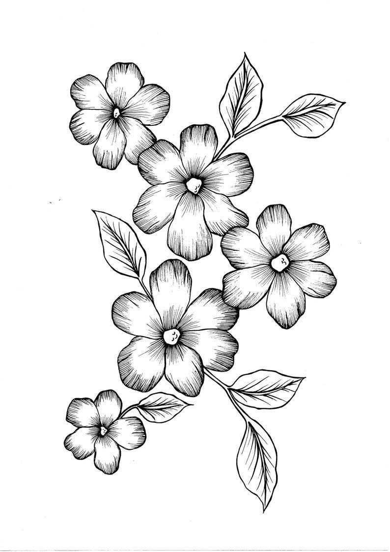 400 Best Coloring Pages Wild Flowers Pdf Coloring Page In 2020 Blumen Bleistiftzeichnungen Blumen Kunst Blumenzeichnungen