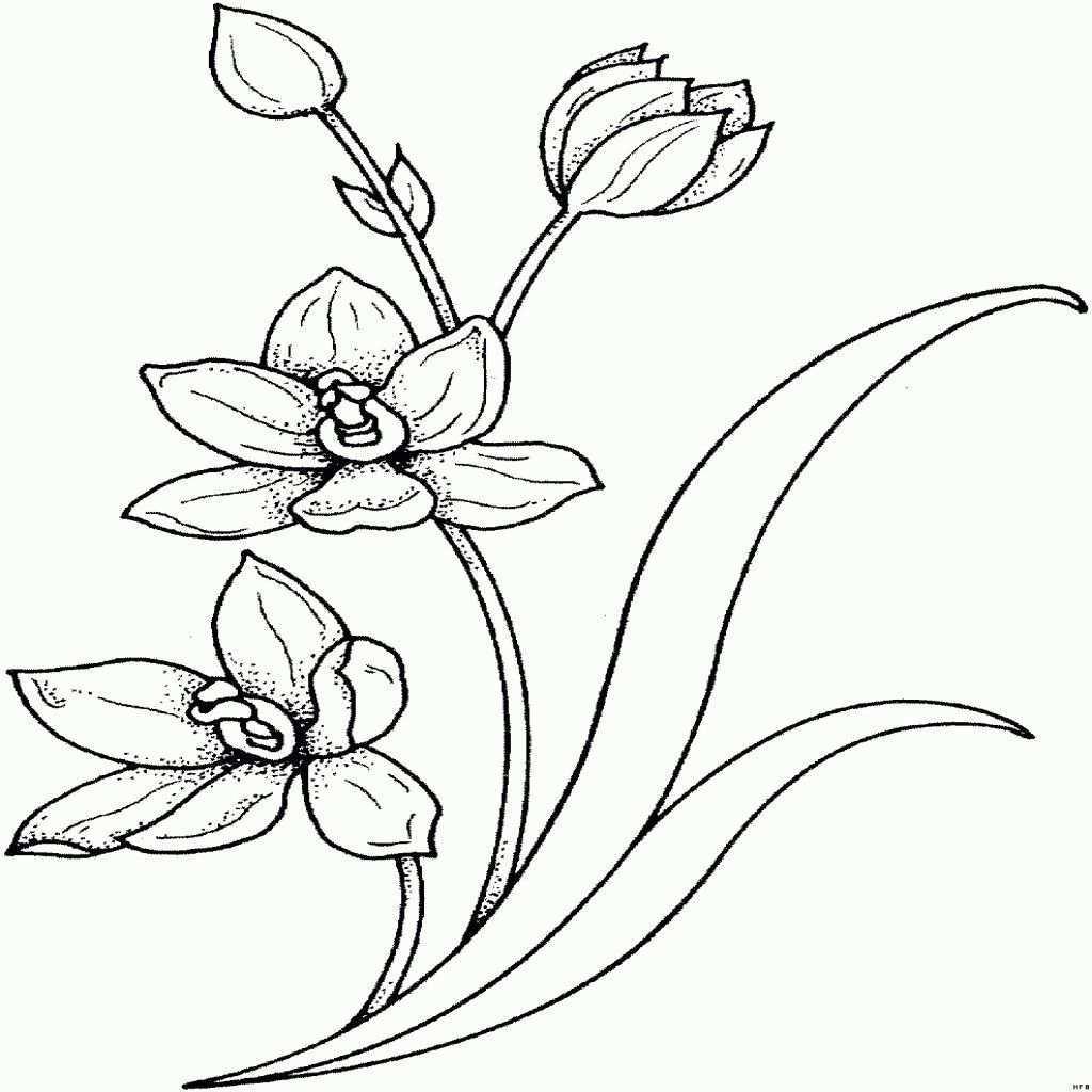98 Einzigartig Blumenranken Zum Ausdrucken Das Bild Kinder Bilder Tattoo Motive Blumenranken Blumen Ausmalbilder