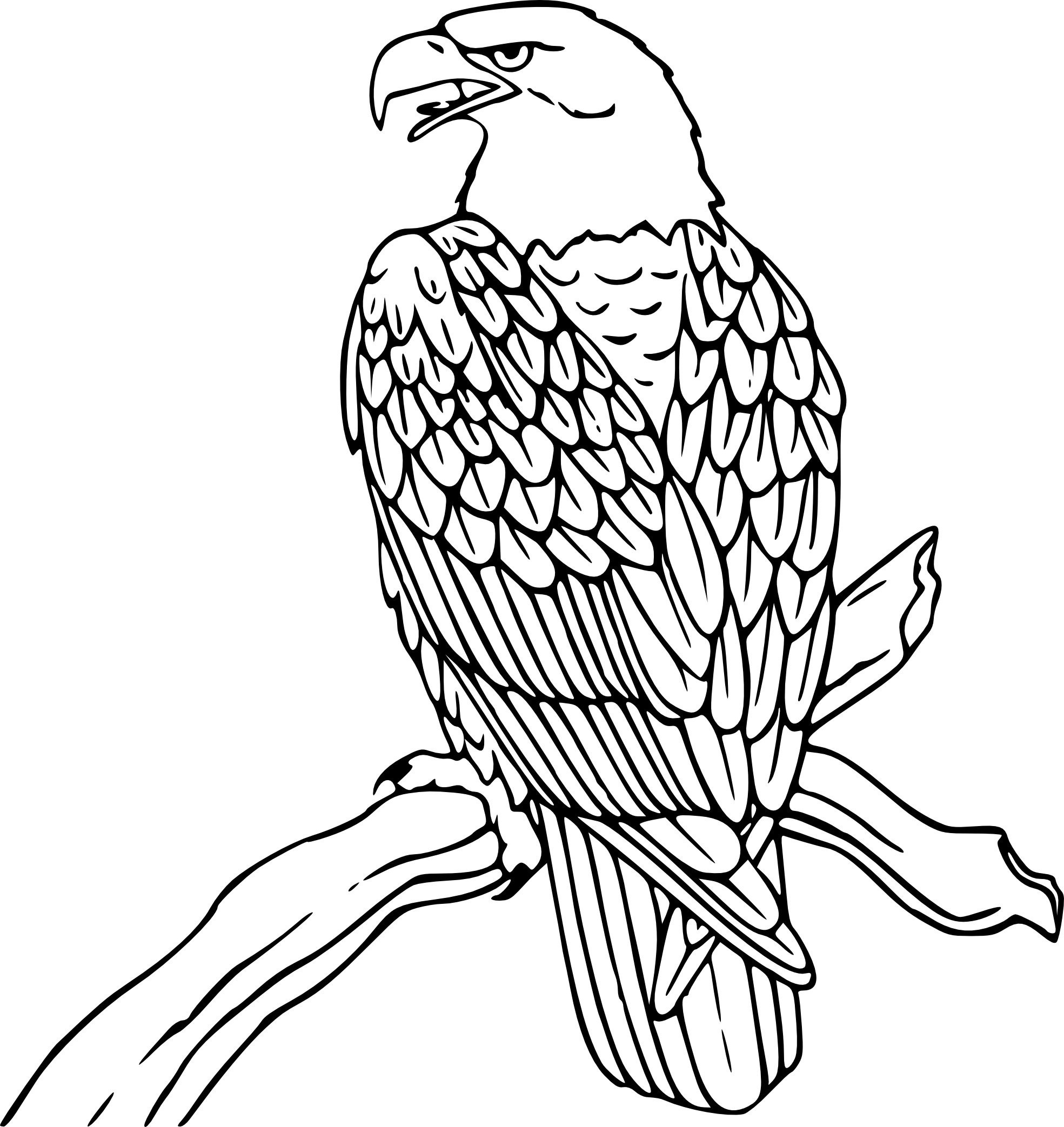 Line Drawing Of Senior Citizen Bird Coloring Pages Eagle Drawing Animal Coloring Pages