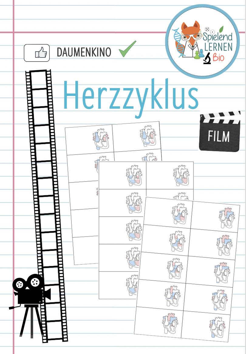 Herzzyklus Daumenkino Unterrichtsmaterial Im Fach Biologie Daumenkino Kino Daumen