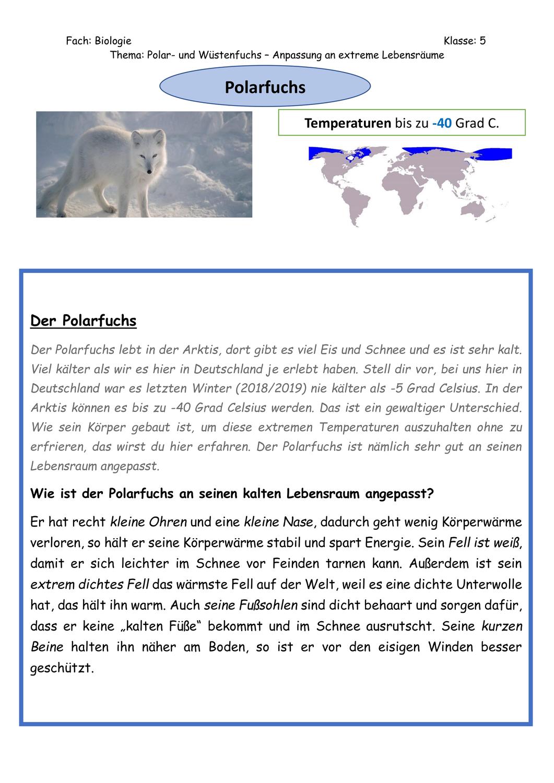 Ab Polarfuchs Unterrichtsmaterial Im Fach Biologie Polarfuchs Biologie Fuchs