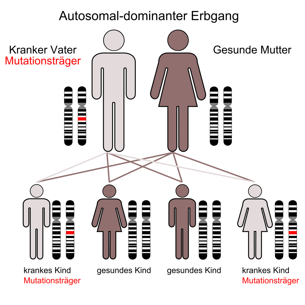 Dominanz Genetik Wikipedia
