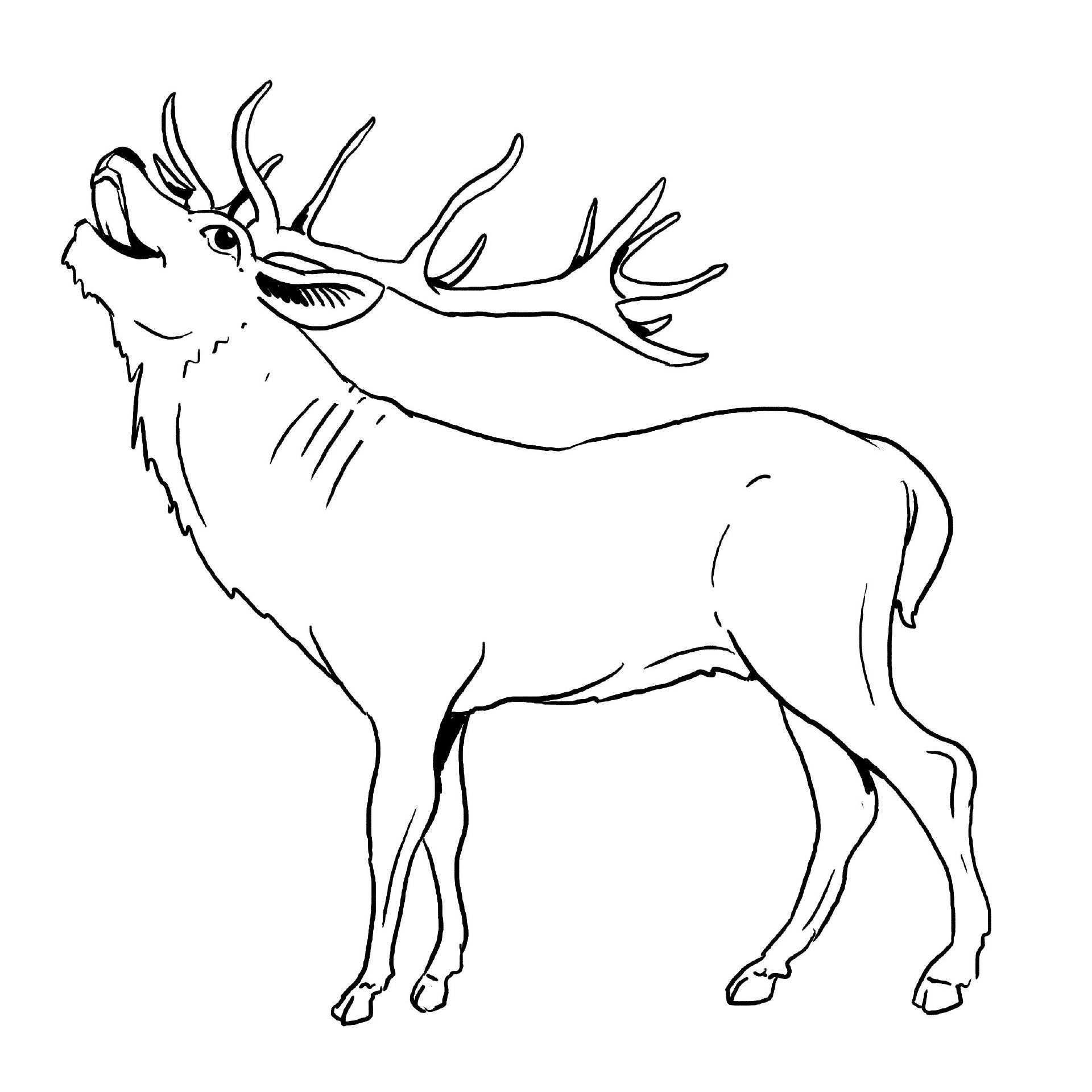 Elch Malvorlage Gratis Coloring Art Photography Illustration Ausmalbilder Tiere Malvorlagen Ausmalen