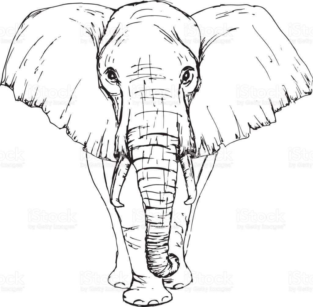 Sketch By Pen African Elephant Front View Elefanten Skizze Elefant Gemalde Elefant Zeichnung
