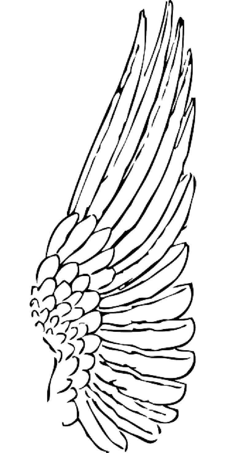 Umriss Feder Engel Vogel Vogel Flugel Flugel Public Domain Angel Wings Art Engelsflugel Zeichnung Engel Zeichnung