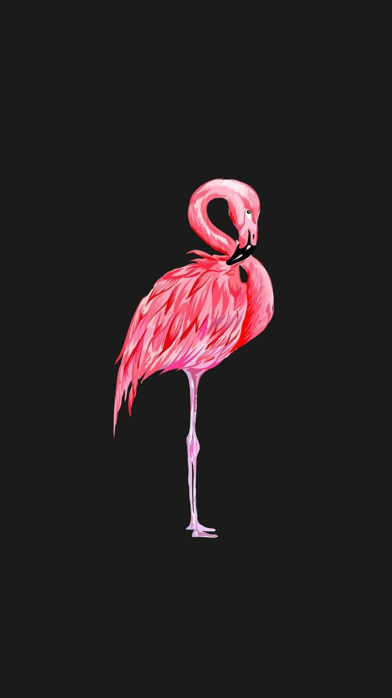 Hintergrund Flamingo Hintergrund Flamingo Animalbackgroundiphone Animalw Hintergrund Flamingo Hinte In 2020 Flamingo Tapete Hintergrund Tier Wallpaper