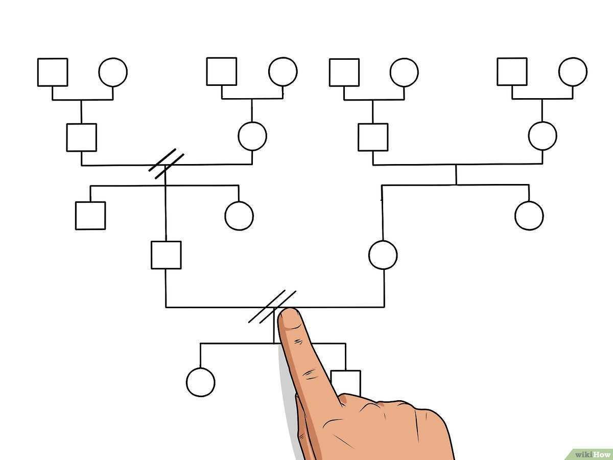 Ein Genogramm Erstellen 14 Schritte Mit Bildern Wikihow