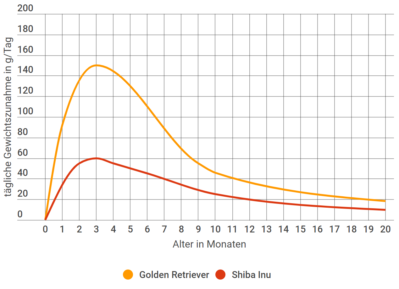 Golden Retriever Wachstum Grosse U Gewicht Mit Tabellen Und Kurven