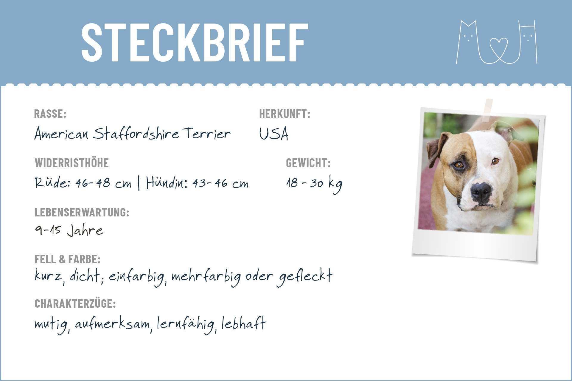 American Staffordshire Terrier Steckbrief Charakter Wesen Haltung