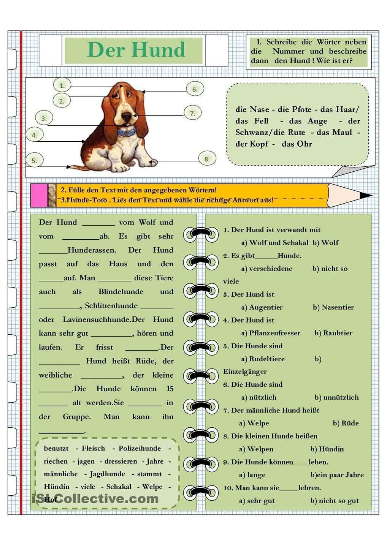 Die Tiere Der Hund Schulhund Tiergestutzte Padagogik Hunde