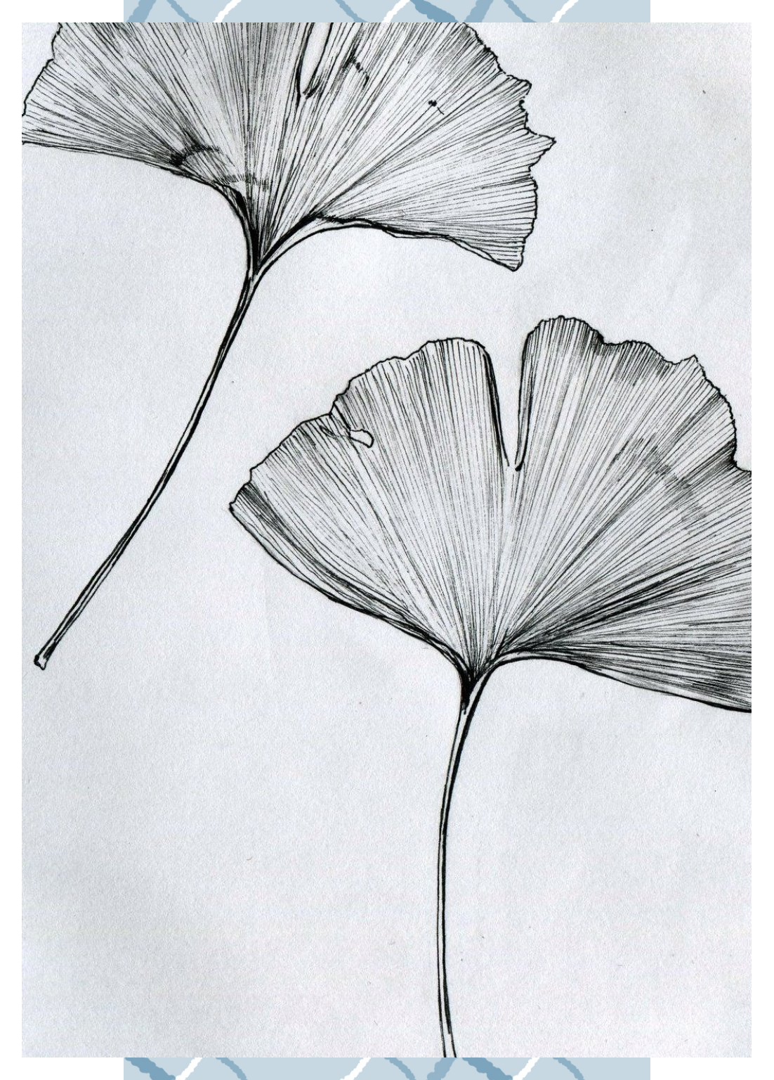 Millicent Crow Gingko Leaf Drawing Leaf Art Japanese Tattoo Designs