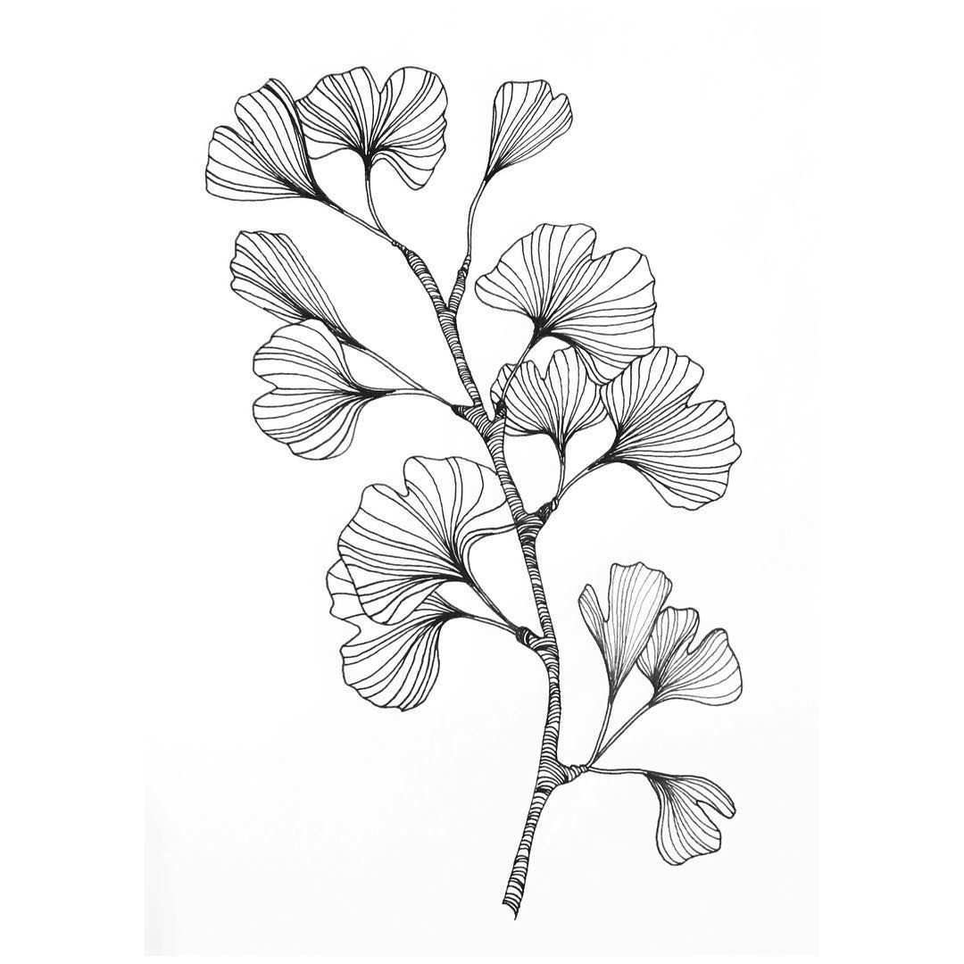 Ginko Branch With Leaves As A Tatoo Art In Black And White Lineart For Poster Helena Areman On Instagram Flower Drawing Drawings Leaf Drawing