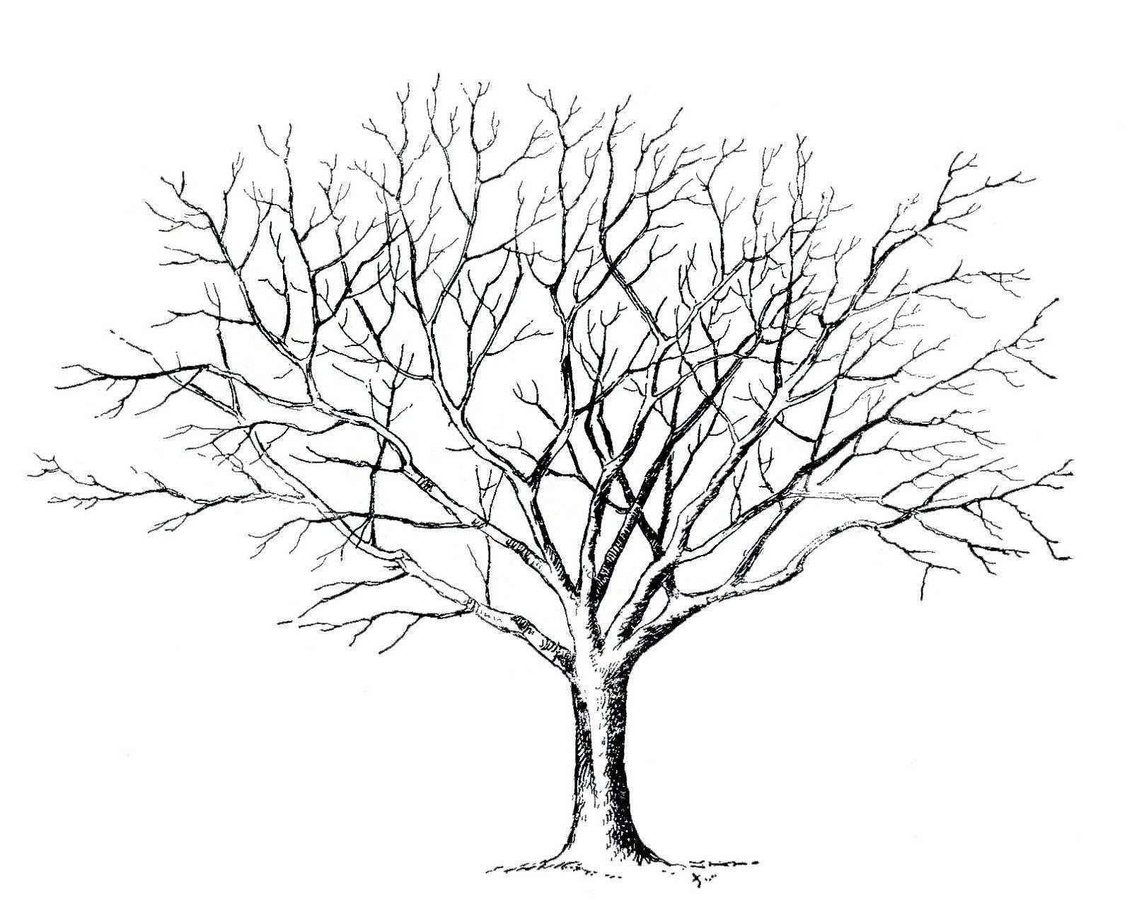 Malvorlage Baum Ohne Blatter Baum Zeichnung Baum Vorlage Blattzeichnung