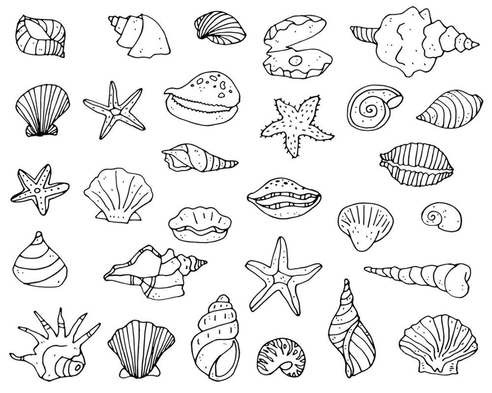 29 Shell And Starfish Doodles Digital Png Clipart Graphics Etsy Doodles Shell Drawing Doodle Art
