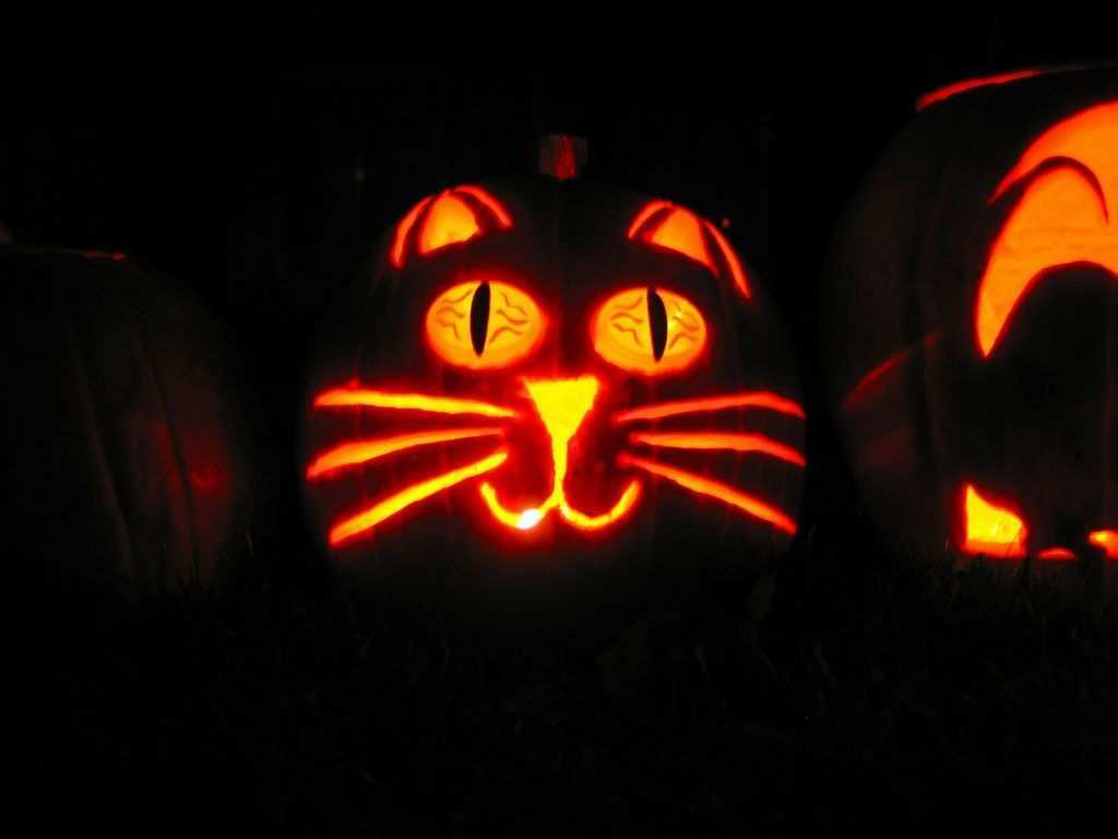 Free Stencils For Pet Themed Halloween Pumpkins Cutecatsdiy Halloween Kurbis Katze Kurbis Schnitzen Katzenkurbis