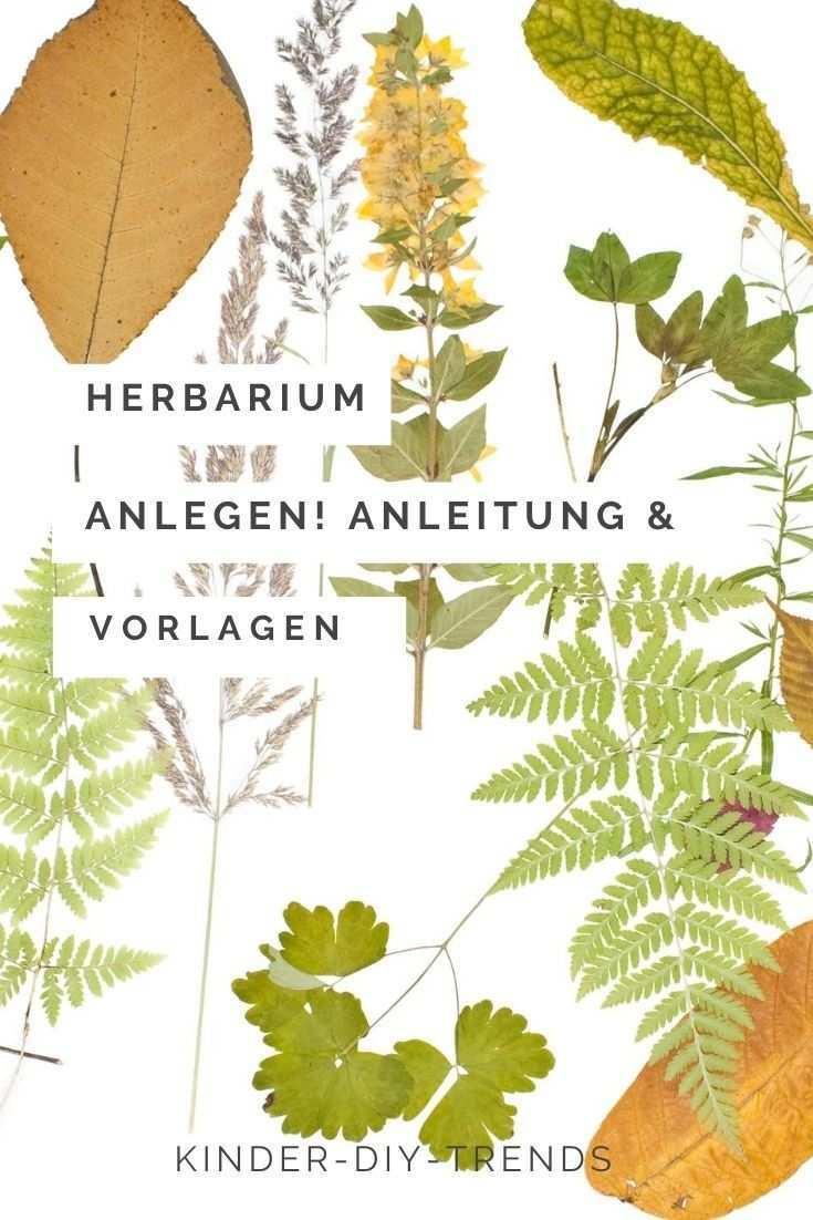 Herbarium Anlegen Und Gestalten Mit Vorlagen Schritt Fur Schritt Anleitung Deckblatt Gestalten Gestalten Deckblatt