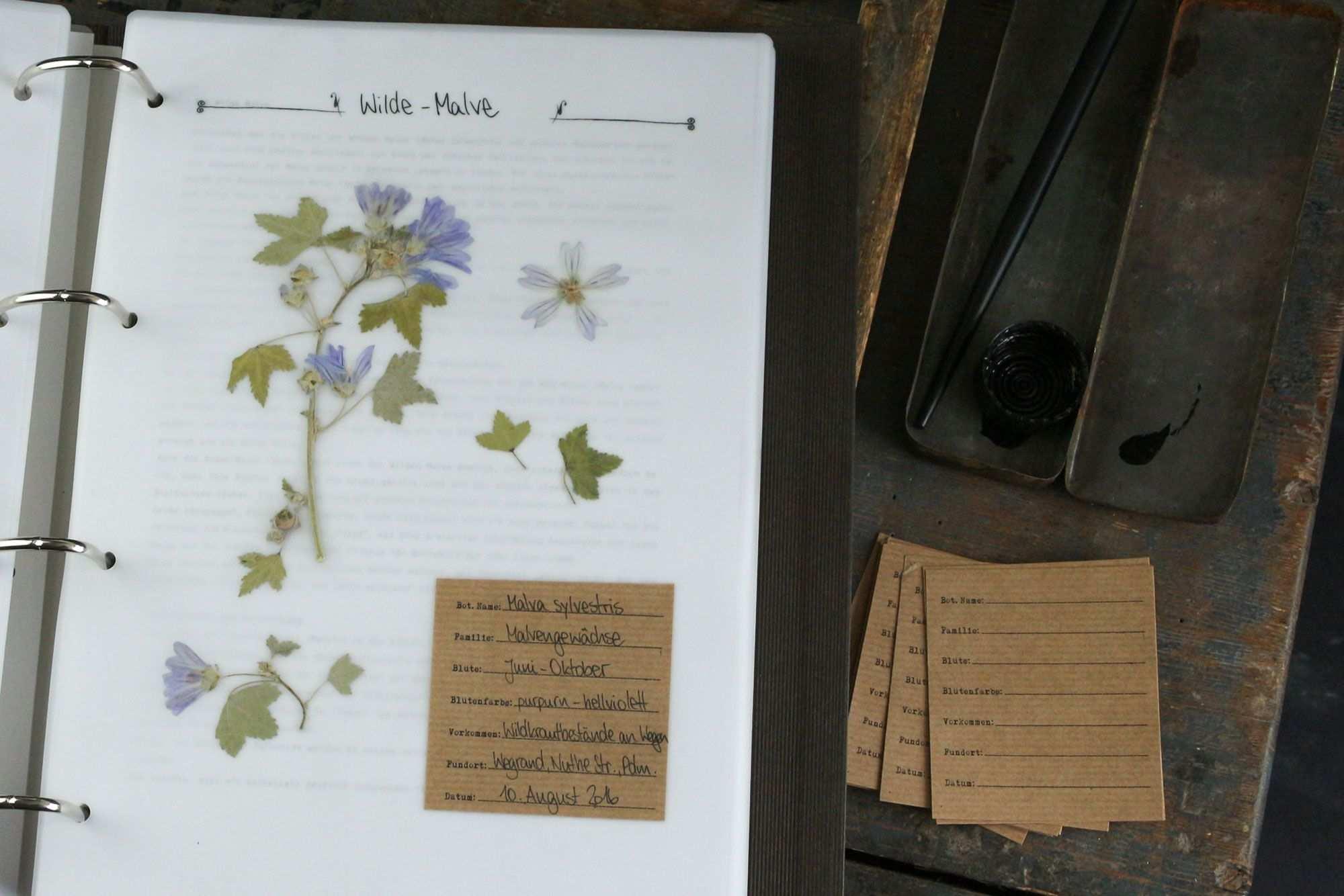 Herbaium Vorlagen Etiketten Herbarium Vorlage Vorlagen Etiketten