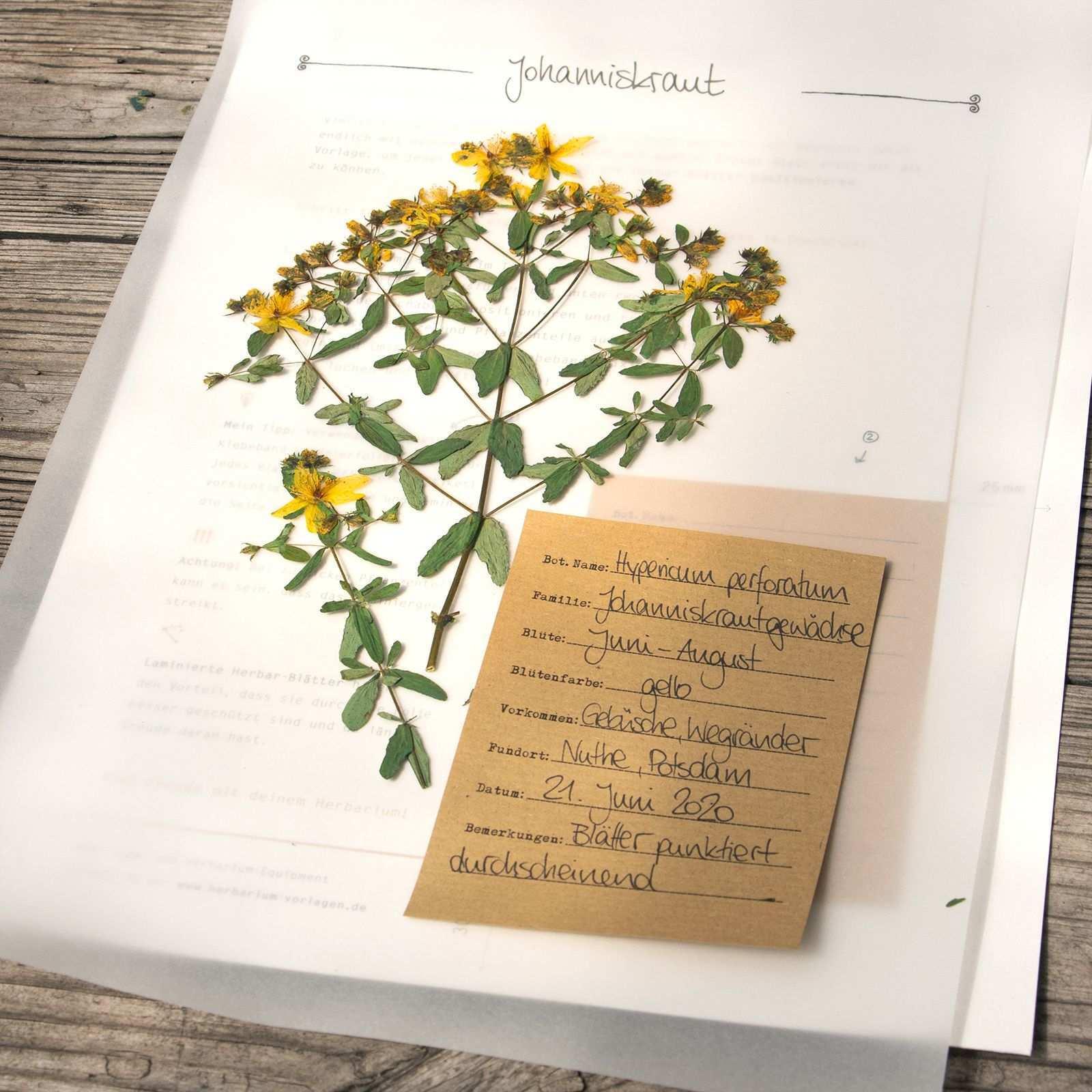Gestalte Dein Eigenes Herbarium In 2020 Herbarium Vorlage Deckblatt Vorlage Pflanzenblatter
