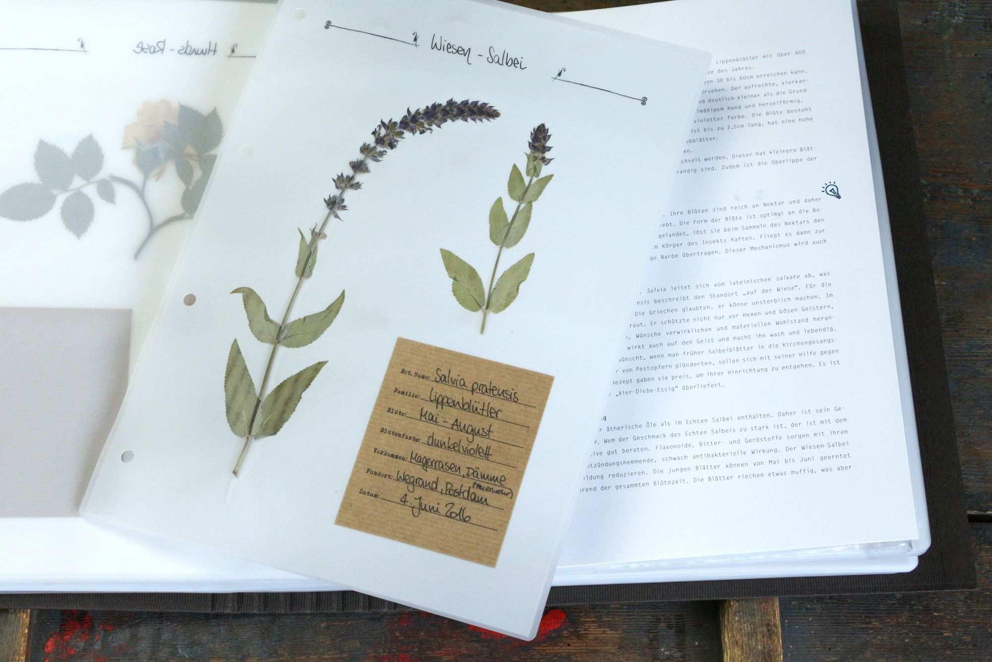 Herbarium Vorlagen Starter Kit Herbarium Vorlage Vorlagen Gestalten