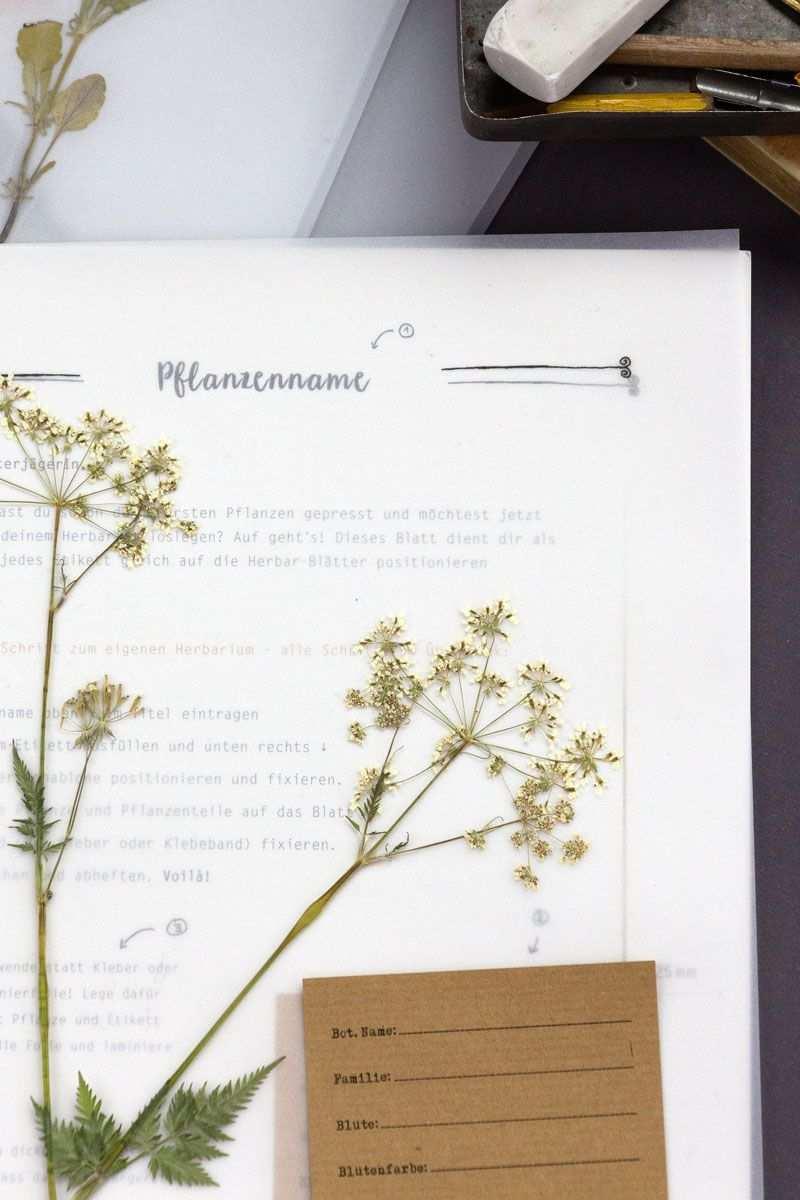 Herbarium Starter Kit Herbarium Vorlage Pflanzenblatter Pflanzen