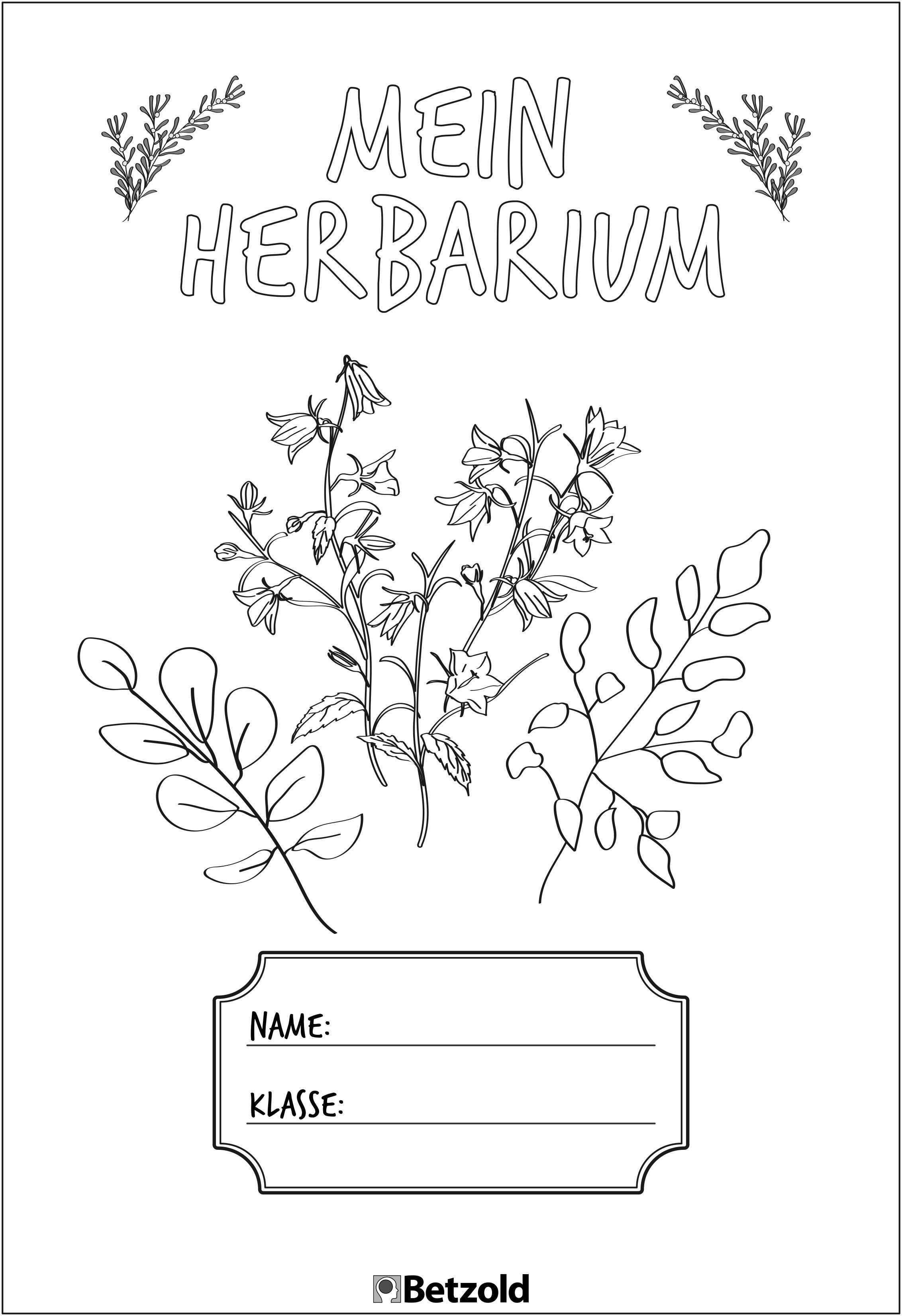 Herbarium Anlegen Tipps Vorlagen Schulunterricht Deckblatt Erstellen Deckblatt