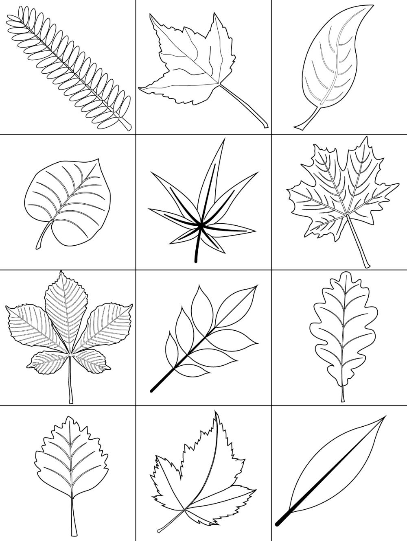 Herbstbasteln Mit Kindern 16 Ideen Anleitungen Herbstblatter Vorlagen Herbst Ausmalvorlagen Kostenlose Ausmalbilder Herbstblatter Vorlagen
