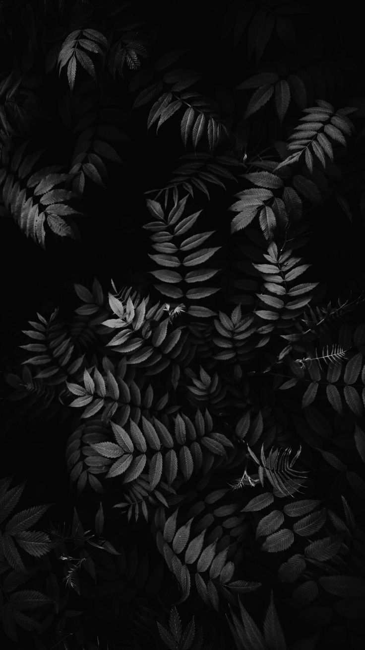 Leaves Plants Lockscreen Wallpaper Latar Belakang Fotografi Hitam Putih Seni Gelap