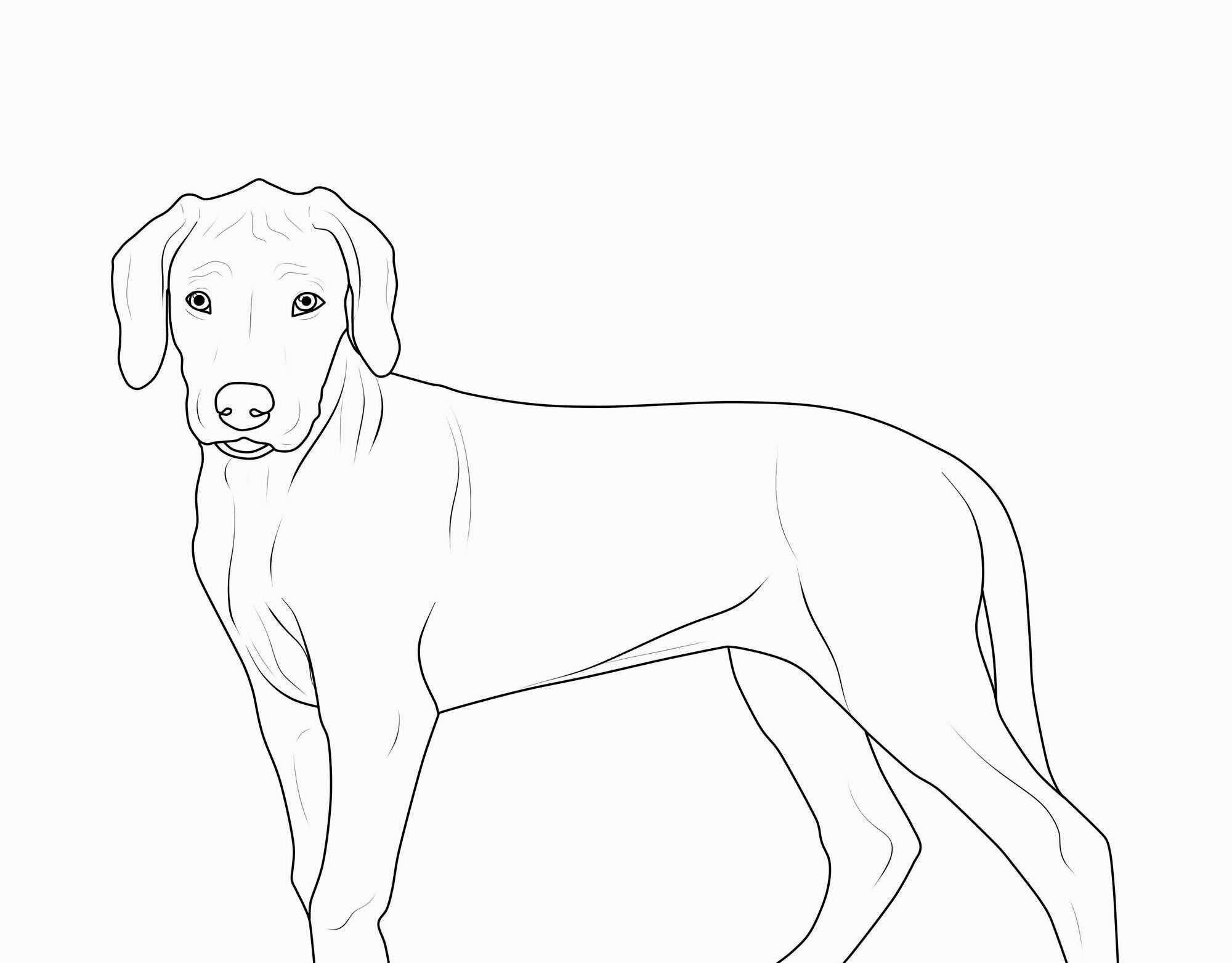 Neu Hund Malen Vorlage Farbung Malvorlagen Malvorlagenfurkinder Malvorlage Hund Ausmalbilder Hunde Hund Malen