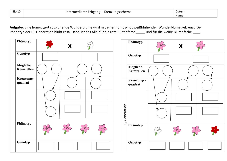 Bio 10 Intermediarer Erbgang Unterrichtsmaterial Im Fach Biologie Unterrichtsmaterial Sekundarstufe Biologie