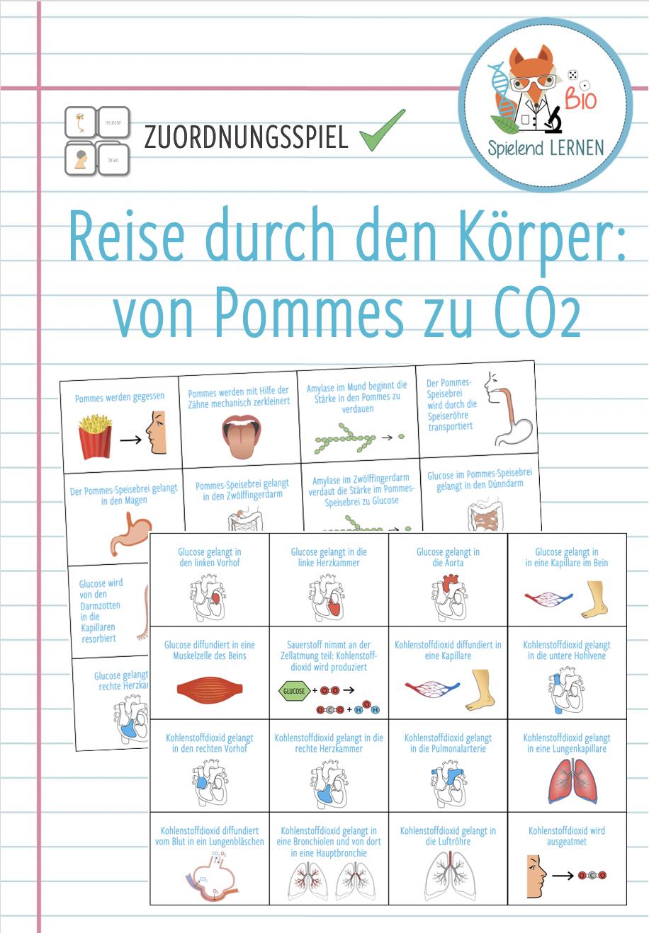 Reise Durch Den Korper Von Pommes Zu Co2 Unterrichtsmaterial Im Fach Biologie Lernen Unterrichtsmaterial Biologie