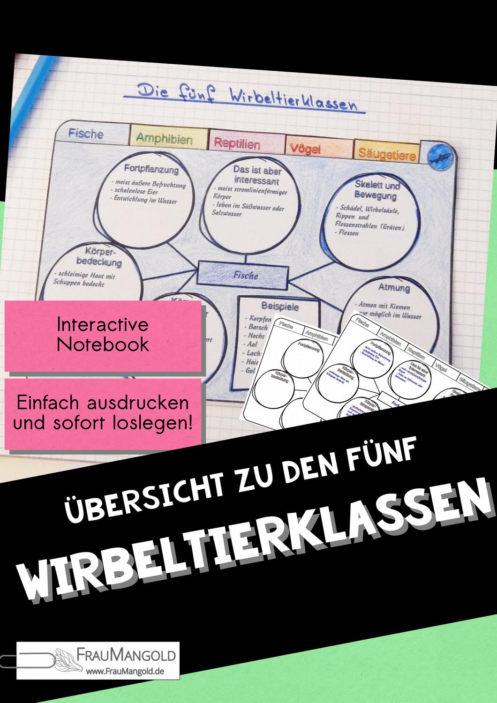 Die 5 Wirbeltierklassen Ubersicht Arbeitsblatt Biologie Interactive Notebook Sketchnotes Hefteint Wirbeltierklassen Biologie Wirbeltiere