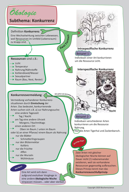 Lernsketchnote Okologie Konkurrenz Biochemscience Lernen Tipps Schule Nachhilfe Mathe Lernen