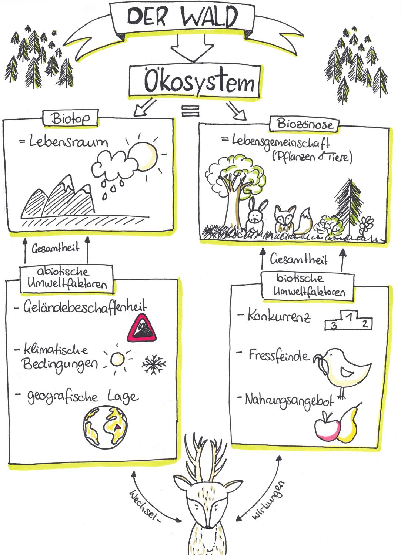 Okosystem Wald Biologie Unterrichten Lernen Tipps Schule Unterrichten