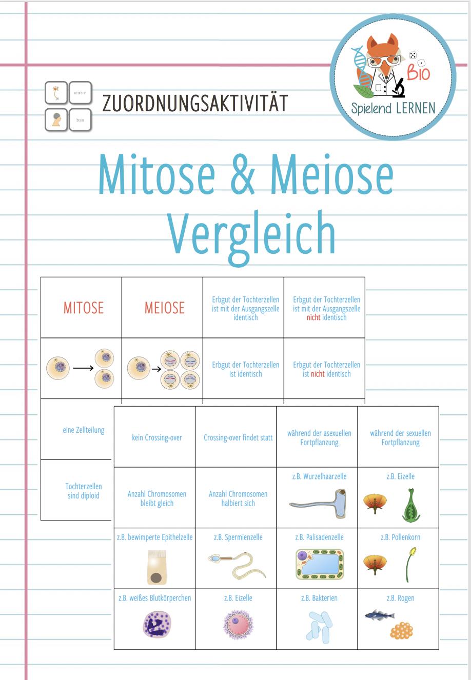 Mitose Und Meiose Vergleich Zuordnungsaktivitat Lernen Tipps Schule Biologie Unterrichten Unterrichten
