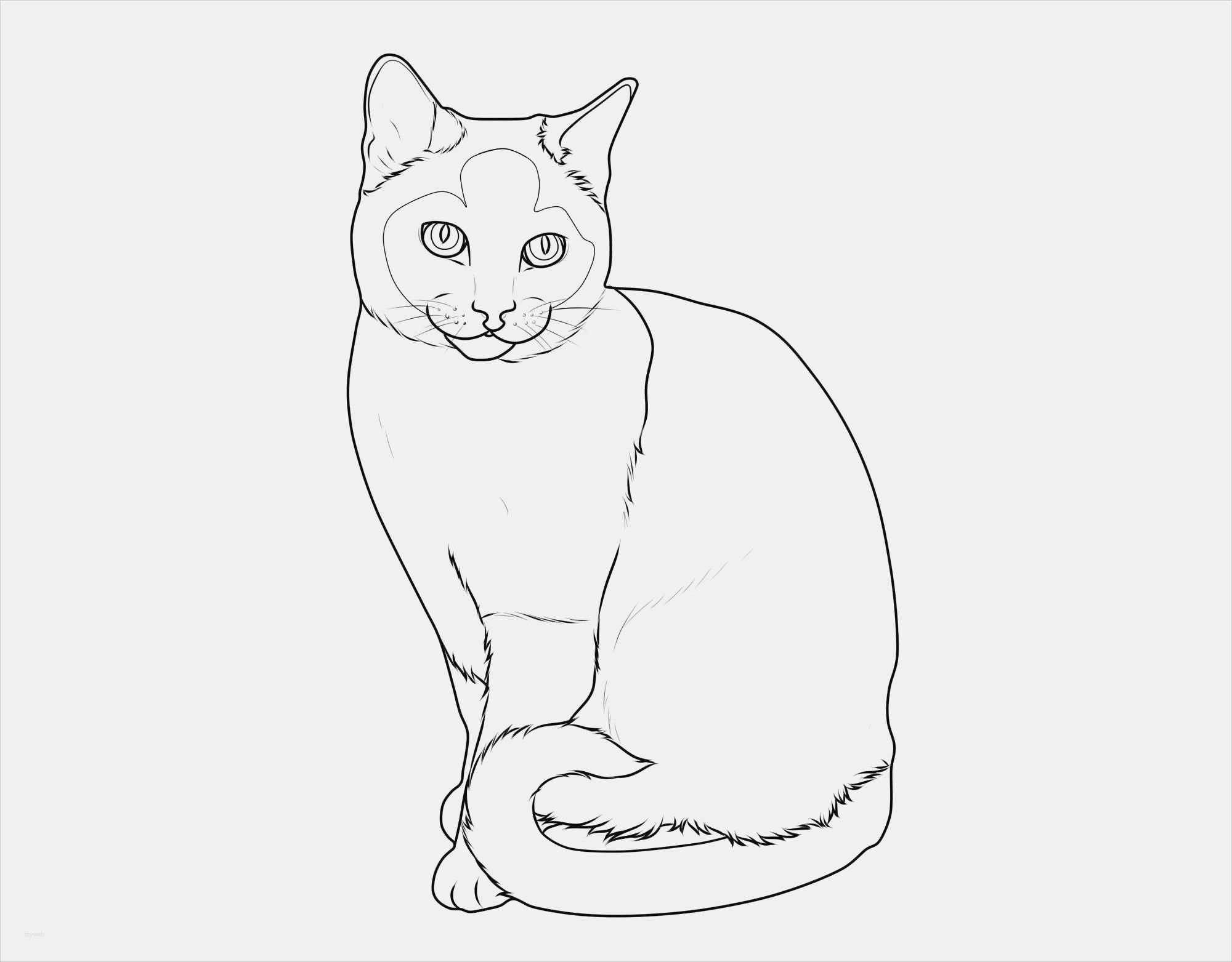 Neu Katzen Zum Malen Farbung Malvorlagen Malvorlagenfurkinder Katze Malen Malvorlagen Tiere Katzen
