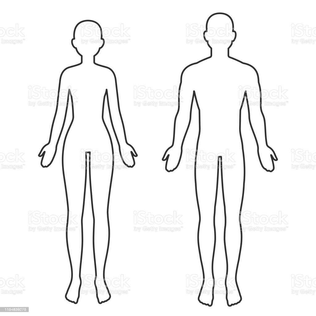 Mannliche Und Weibliche Korperumrisse Stock Vektor Art Und Mehr Bilder Von Anatomie Istock
