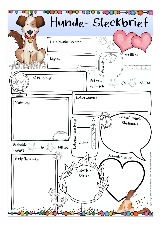 Steckbrief Hunde Unterrichtsmaterial Im Fach Sachunterricht Haustier Adoption Hund Steckbrief Hunde