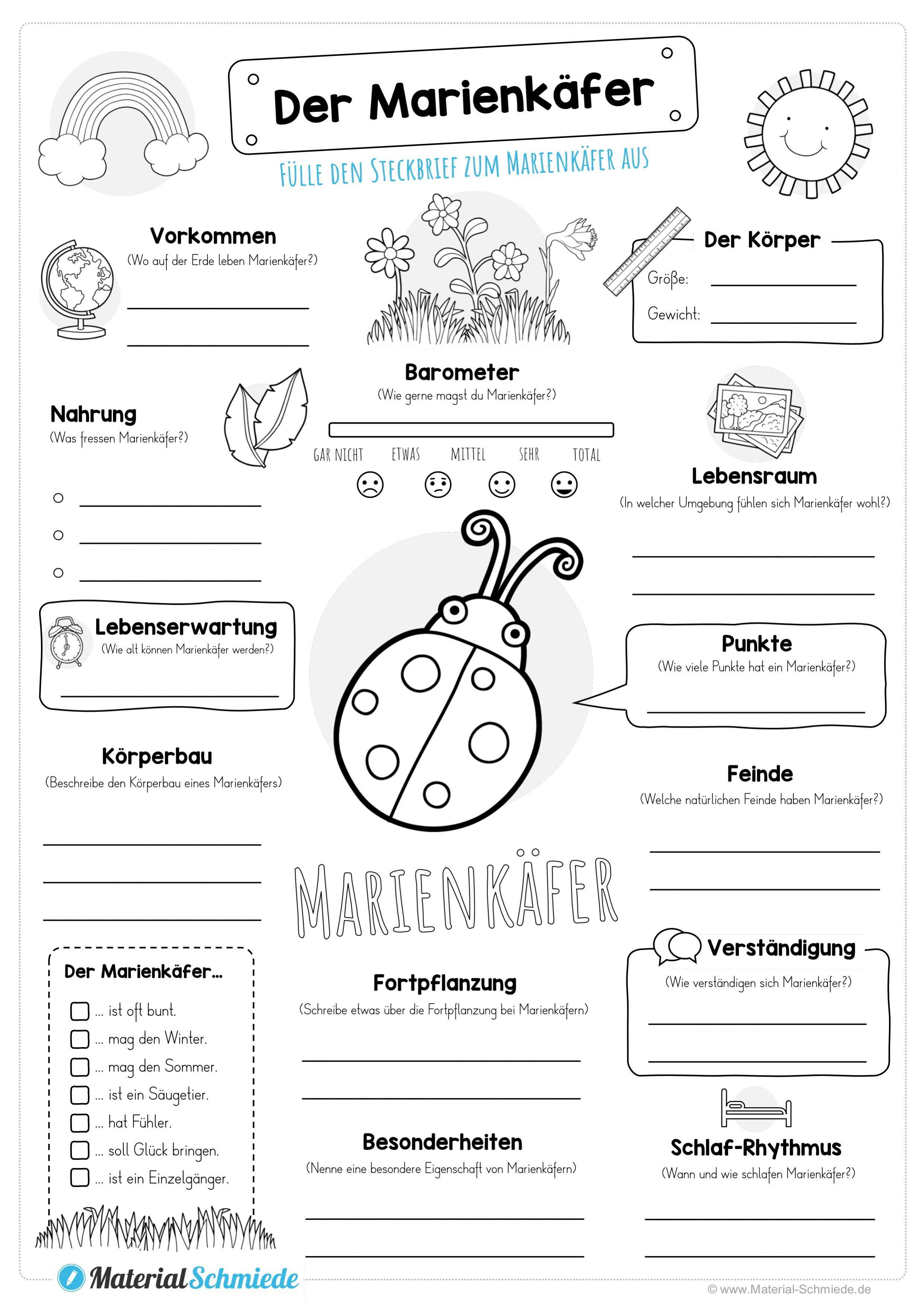 Steckbrief Marienkafer Unterrichtsmaterial In Den Fachern Biologie Sachunterricht Steckbrief Unterrichtsmaterial Marienkafer Steckbrief