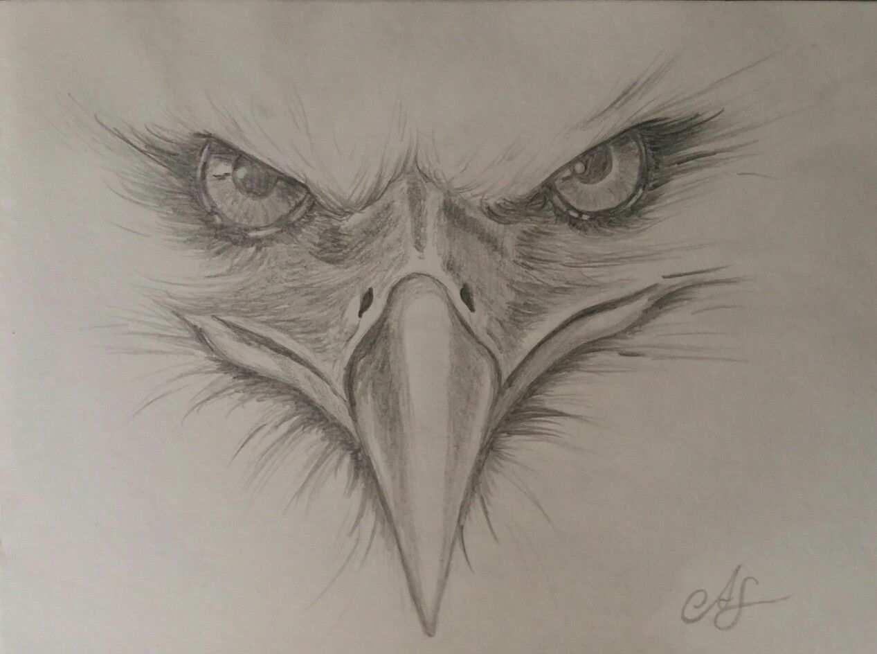 Adler Gezeichnet Nach Vorlage Adler Zeichnung Adler Gemalde Tiere Zeichnen