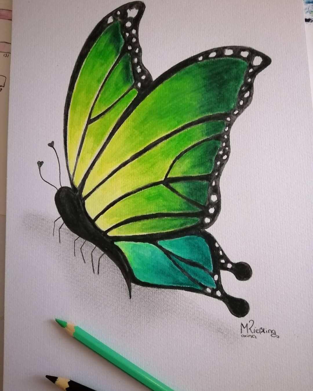 Butterfly Butterflydrawing Schmetterling Neon Aquarellstifte Farbzeichnung Kunst Malen Butterfly Farben Buntstifte Plant Leaves Plants